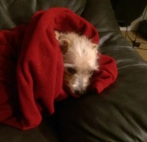 arya blanket