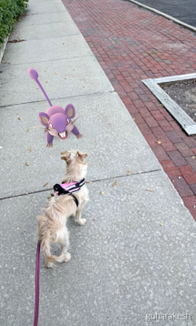 Arya's in a face off with a Rattata. What a strange world we live in!