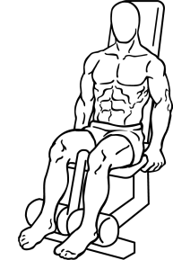 Seated-leg-curl-1.png